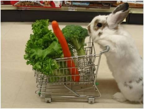 brokoli udah,wortel udah,selada udah,apalagi ya......
