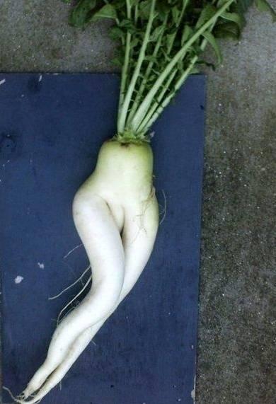 ini lah sayur ter sexy di dunia! kalo di masak tega gk ya! abis liat klik wow ya