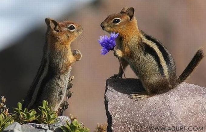 hewan pun gax kalah romantis saat menyatakan cinta pada pasangan nya.... :D jngan lupa Wow nya ya... :)