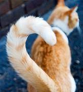 Fungsi Ekor Kucing Fungsi ekor kucing adalah menghibur dirinya sendiri
