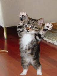kucing imuuuut, pinter lagi,..