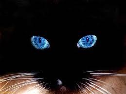 klik WOW maka kucing ini matanya berubah