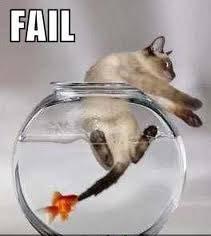 kucingnya takut sama ikan, hehehehe :) Bilang WOW