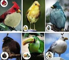 inilah angry bird asli please di wow foto sendiri ini wkkwkwkwkwk