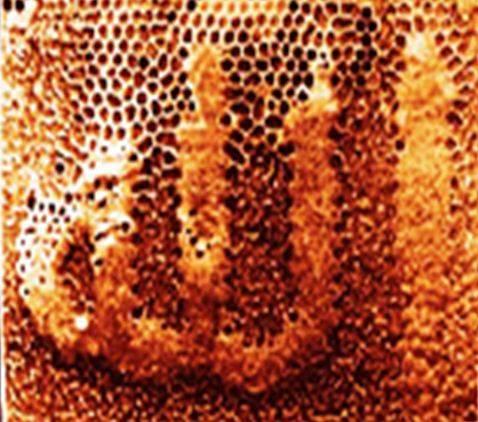 Subhanallah, ada lafaz ALLAH di sarang lebah