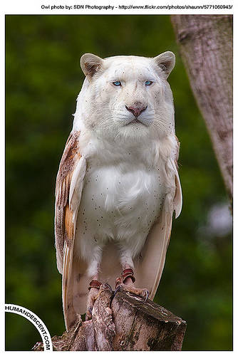 Ada lagi nih sobat pulsker. hewan gabungan hasil sotosop keren abieezzzz Lion + Owl = liowl Visit my blog http://gameadfly.blogspot.com/ http://razor-claws.blogspot.com/