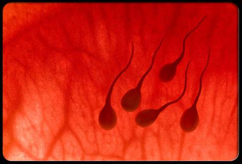 Антиспермальные антитела в сперматозоидах