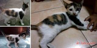 subhanallah, kucing ini bercorak lafadz allah yg orang islam klik WOW!!!!!