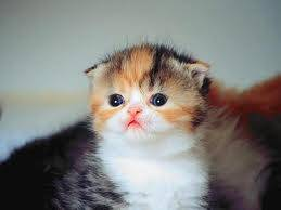 masyallah lucu banget kucing itu kalo emang sayang sama kucing Klik WOW ya INGET KUCING SAHABAT NABI