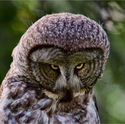 klik WOW maka burung ini akan SMILE :)