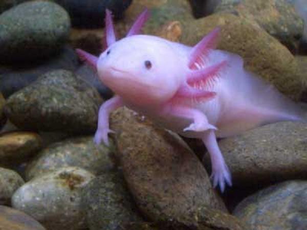 Ada yang tahu hewan apakah ini??.... O.o