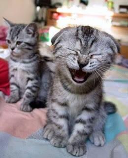 widih yang ini kucingnya lucu amat senyum apa nangis ya hahahaha... jangan lupa klik WOW nya :)