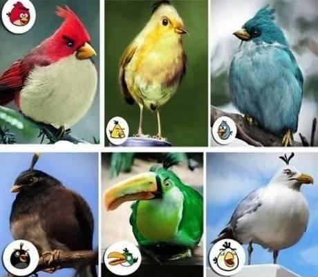Tahu Game Angry Birds kan ? Mungkin seperti ini bentuk asli burung burungnya di Dunia nyata. jika kamu suka game ini tolong tulis komentar WOW
