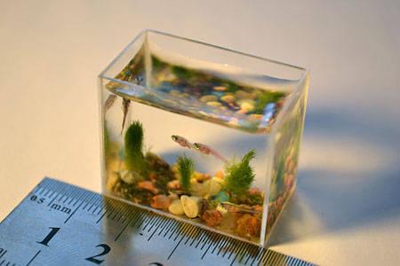 Inilah aquarium terkecil di dunia, dengan ukuran 30 x 24 x 14 mm, dengan daya tampung air 10 ml serta dihiasi berbagai ornamen batu berwarna dan pasir. Dengan ukuran ini, maka hanya anak ikan yang bisa masuk ke dalamnya.