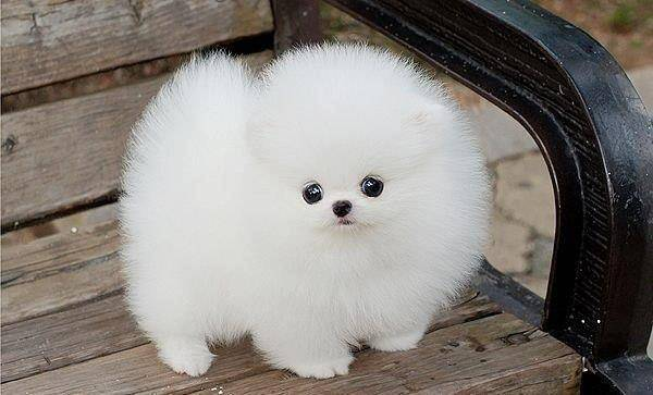 lucu nya!! (=^.^=) WOW nya ya,.. ;) aku gak tau itu kucing atau anjing,.. :D