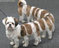 ini anjing apa ulat ea jgn lupa klik wow nya dulu