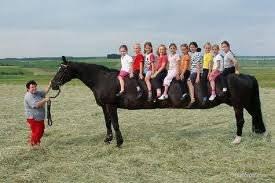kuda terpanjang di dunia,,,,bisa lebih dari 10 orang,,,,WOW,,,!!!