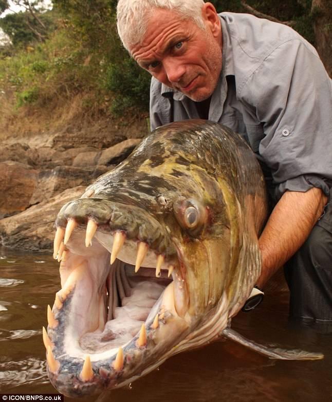 Tiger Fish from Afrika