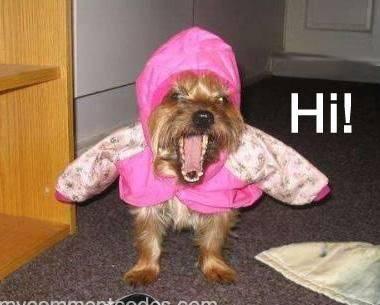 Anjingnya marah,soalna g ada yg like,coment,WoW.... WoW dl yuk,byar anjingnya g marah,,, hehehehe