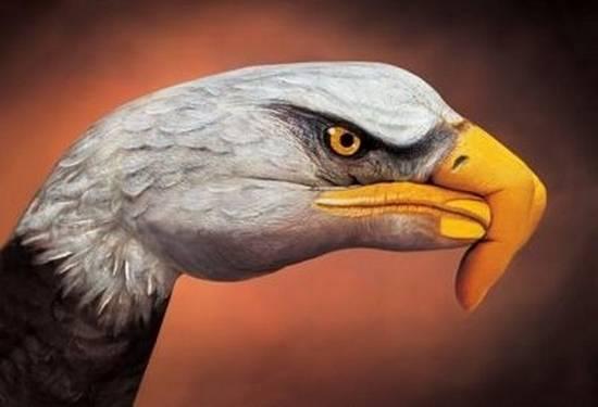 senii jari yqq di lkkz menjjadi elang yang spekta W O W