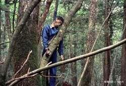 Hutan Aokigahara di Jepang