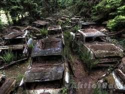 Hutan Berkabut, Kuburan Mobil-mobil Mewah
