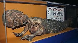 Ada yang tau ini apa..? ini adalah ikan duyung yang bernama Fiji mermaid.