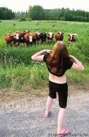 Pikirannya Jorok Tuh Sapinya!! Klo Klian beda sifat sma sapinya Bilang WOW y!