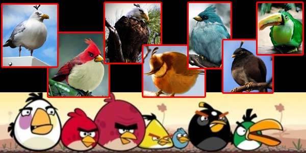 karakter angri birds