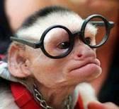 gini-gini,, saya sarjana lho...s2(satwa simpanse)