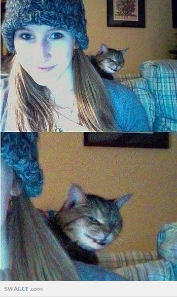 Senyuman Sang Kucing Iblis !