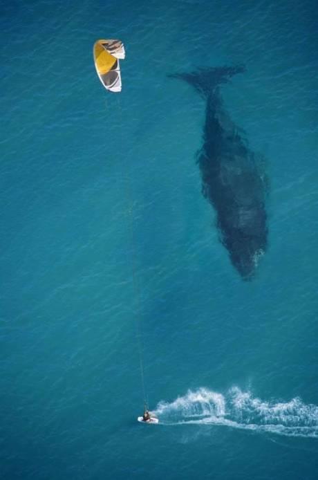peselancar ini tidak sadar jika sedang di ikuti ikan paus besar ini...^_^ Wow nya Gan Kalo tertarik dan kagum ____________ )* Thanks you ^_^