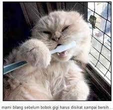 Wooowww.. ! :) Mami Bilang Sebelum Bobok Gigi Harus Disikat Sampai Bersih.. ^_^ Kucing aja tau, masa kita mau kalah sama Kucing.. :D hehehehe