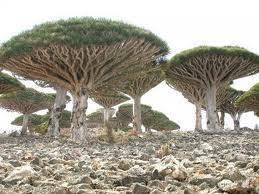 pohon ini bentuknya mirip dengan jamur,,, ada yg tw dimanakah ini?.. WoooW... O.o