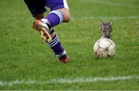 STOP OM KASIAN AMA KUCING NYA__________Klo Anda Pngen Kucing Selamat Xlixk WOW