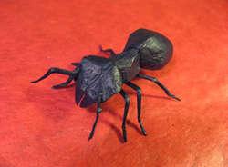 [Origami semut] sepintas gambar diatas mirip dengan semut yang aslinya,, namun tahukah kamu kalo semut ini terbuat dari kertas persegi yang hanya dilipat tanpa pengguntingan atau perekatan menggunakan lem!!???,, Wooww.... O.O