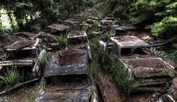 Hutan Berkabut, Kuburan Berbagai Mobil Mewah