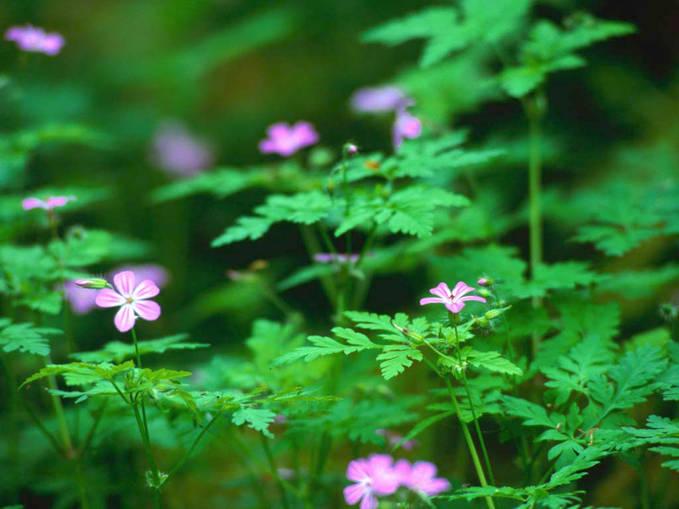 bukan bunga tapi hanya rumput yang memiliki bunga dan hidup dengan indah di dalam hutan yang tak terlalu vesar karna sudah bayak di tebang pohon nya