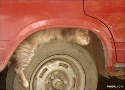 Hahahaha Miawww...Dasar Kucing Tidur gak tau tempat