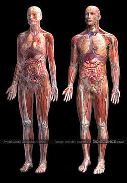 10 hal menakjubkan yang ada pada tubuh kita