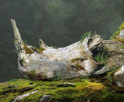 batang pohon yang menyerupai wajah badak ..... Woooww.... O.o
