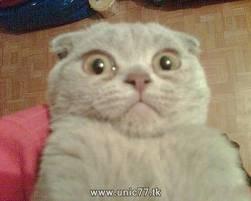 wow menurut anda kucing ini mirip burung hantu atau tidak