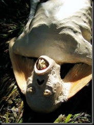 Mahluk aneh (Mermaid) yang ditemukan dikepulaan Malaysia…APA bener itu. Mungkin ini bukti dunia sudah tua… Do you believe it?? Wallahu'alam Jangan lupa WOW nya