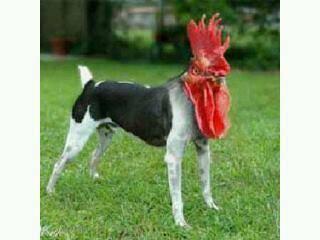 Satu lagi hewan langka yang berhasil ditemukan...