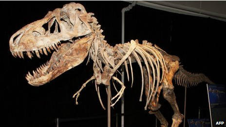 Fosil dinosaurus : Tyrannosaurus Bataar ditemukan tujuh tahun lalu di Gurun Gobi . di lelang bulan Mei lalu seharga lebih dari $1 juta (Rp9,5 miliar). wow..