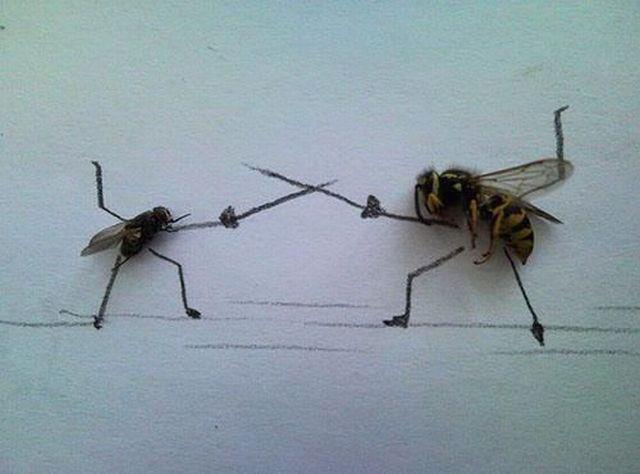 lalat vs lebah,,, dukung yang mana ayo?... :D :D