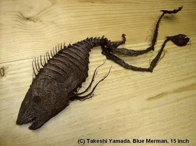 Hewan ini ditemukan di Pulau Sado. Mirip spesies kadal atau bunglon. Makhluk ini juga berbahaya pada tangan-tangannya yang bisa mengembang. Bila usianya semakin bertambah, binatang ini akan terlihat mirip kodok.WOW...!!!!
