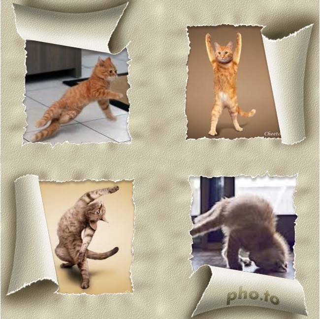 kucing ini hobi nya break dance dan ngedance ala boy band korea hahaha!!!! klik wow yg banyak utk membantu mereka yg suka break dance
