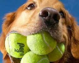 WOOOOWW ............Ini lah dia anjing yg memiliki mulut terlebar di dunia !hingga muat 4 bola baseball W.O.W