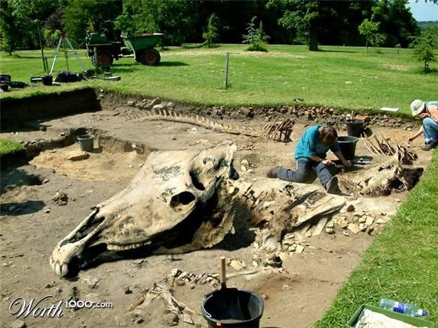 Inilah Kerangka Naga Yang Diklaim Oleh Inggris Sebagai Penemuan Terbaru Spesies Naga/Monster Ini, Ditemukan Di Tahun 1991 Di Inggris Utara